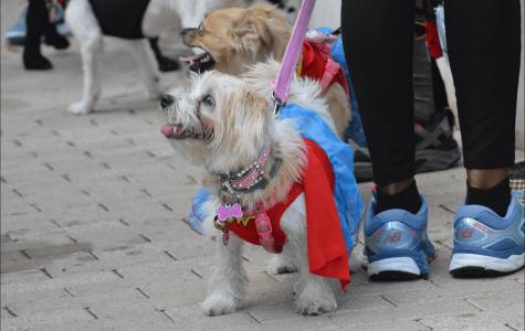 Dogtoberfest Comes to Austin