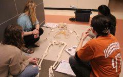 Anatomy Students Build with Bones