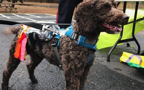 Annual Doggy Dash Raises Awareness For Austin Animal Shelter