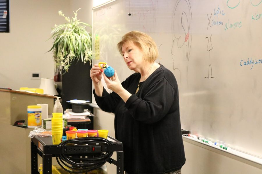 AP and IB Psychology teacher Ms. Katherine Minter shows the class the next step in creating their Play-Doh brains.