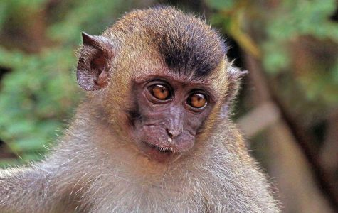 Chinese Scientists Successfully Clone Primates