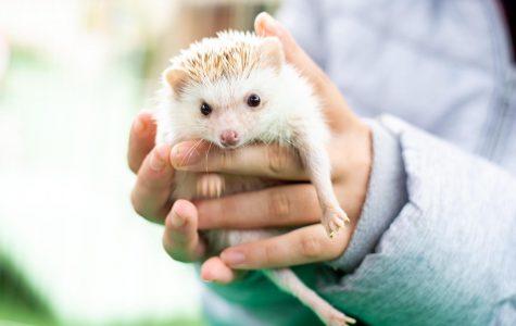 Local Pet Store Hosts Pet-Tober-Fest