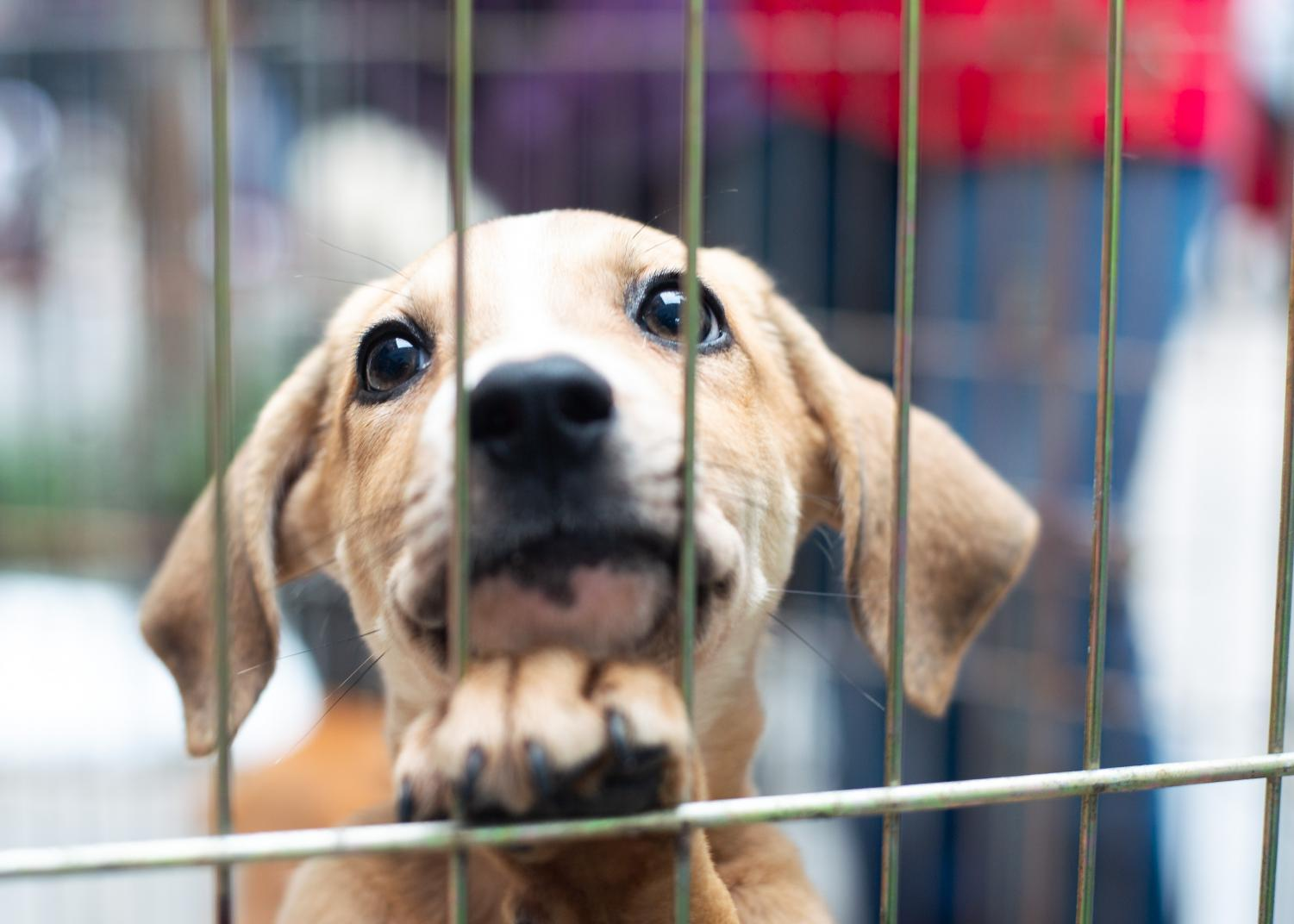 A+nine-week-old+mutt+up+for+adoption+lays+his+paw+on+the+cage.+%22I+think+this+one+is+a+poser%2C%22+a+worker+said.+%22He+is+the+only+one+that+is+staying+for+a+photo.%22