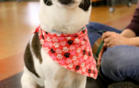 Therapy Dogs Help Students De-stress