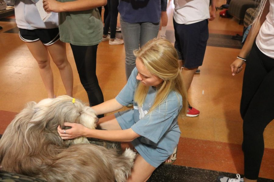 A student plays with a dog.