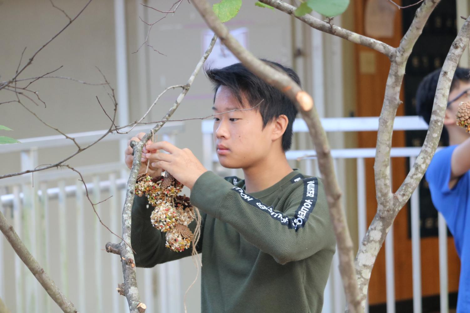 Justin+Gao+%2723+concentrates+as+he+hangs+his+first+bird+feeder+on+a+branch.+