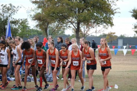 Cross Country Advances Nine Athletes to Regionals