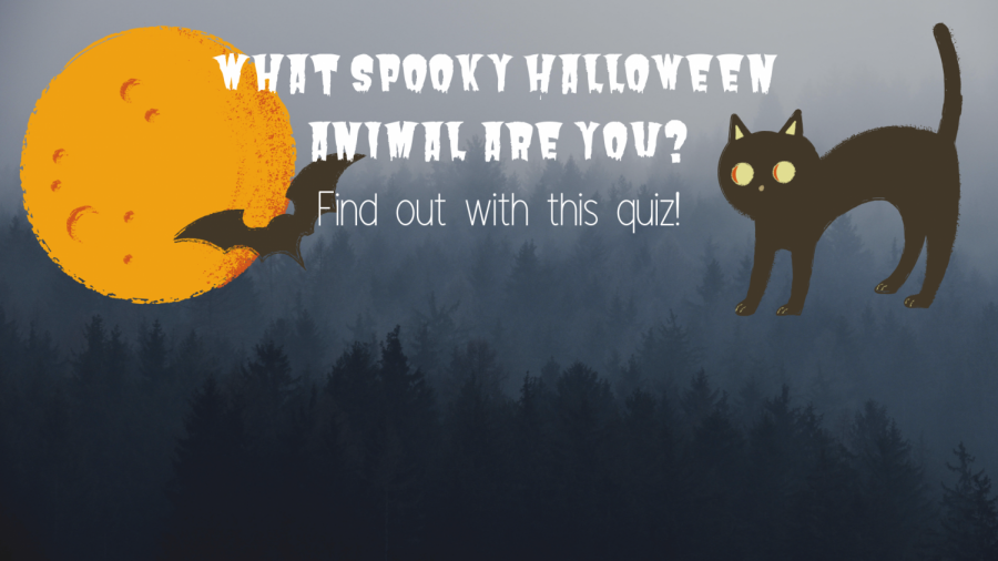 What spooky Halloween animal are you?