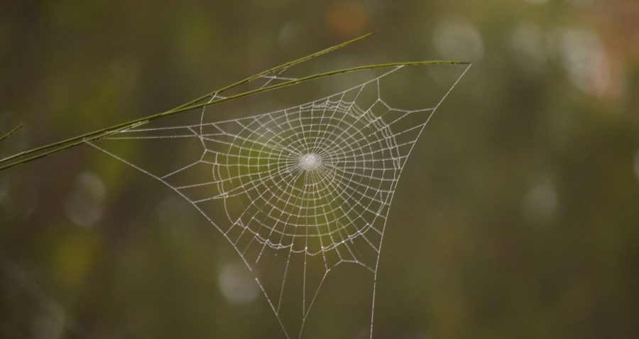 How much do you know about spiders?