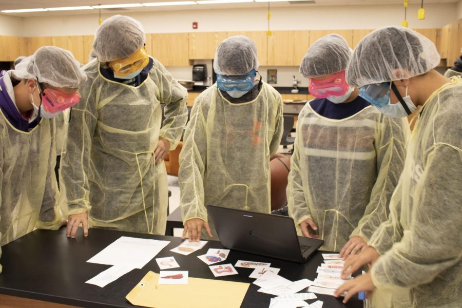 Students look at the fake organs of their patient. They needed to match the organs to the correct body system in order to perform the surgery well.