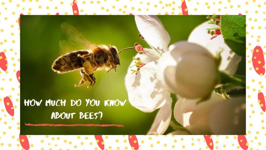 How much do you know about bees?