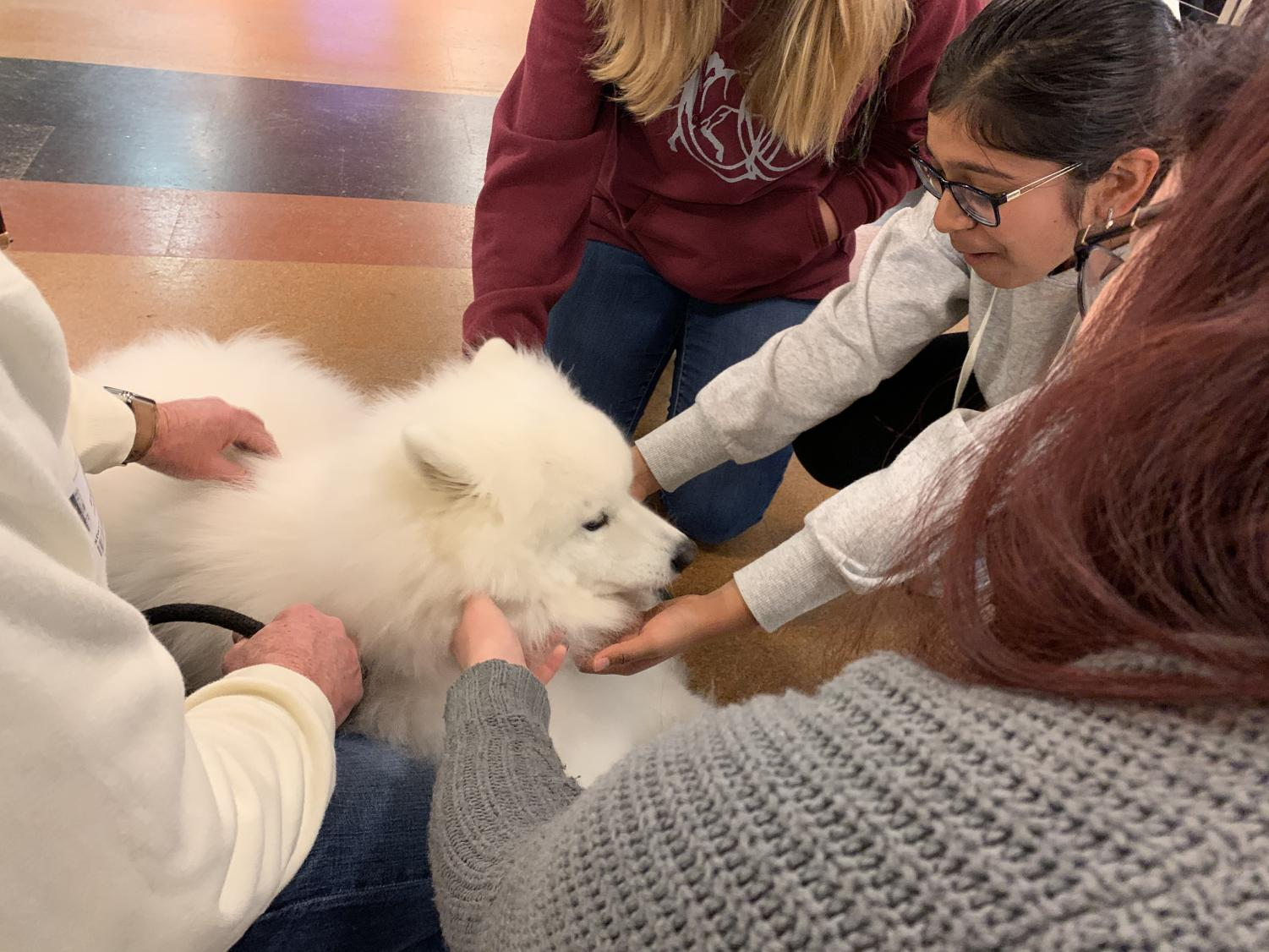 Students+Play+with+Puppies+on+the+Patio+to+Destress