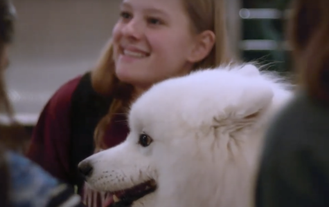 Therapy Dogs Visit Westwood High School