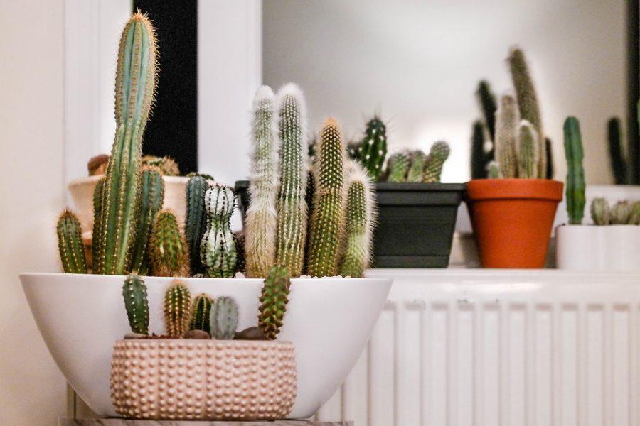 Top Five Houseplants For Beginners