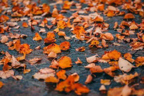 Crossword: Autumn Months