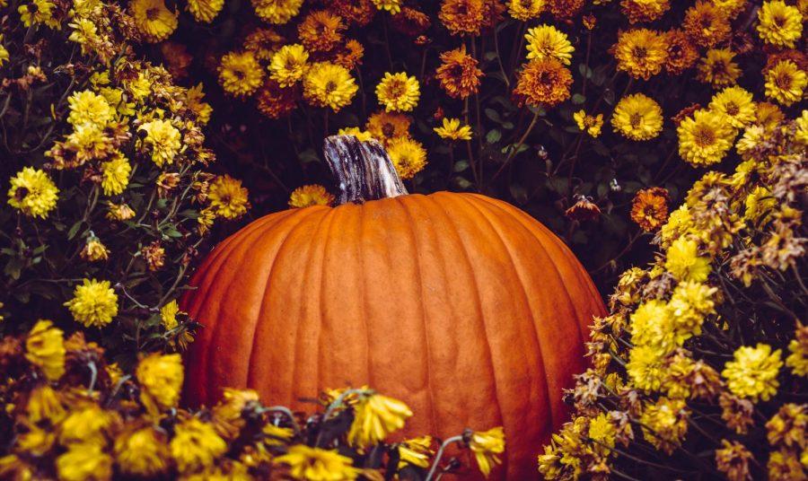 Crossword: Thanksgiving Trivia