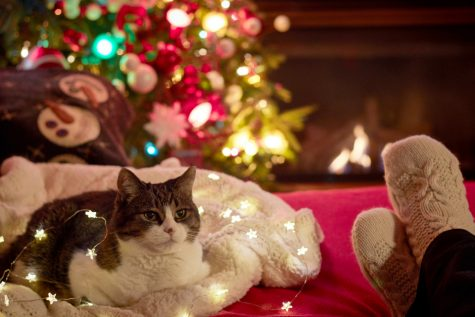 Top 5 Ways to Celebrate Christmas