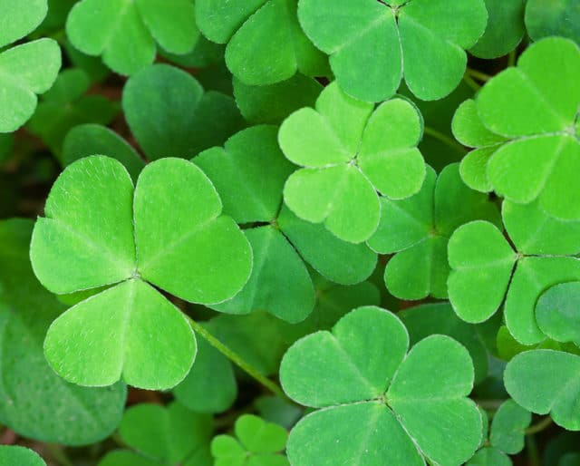 How Much Do You Know About St. Patrick's Day?