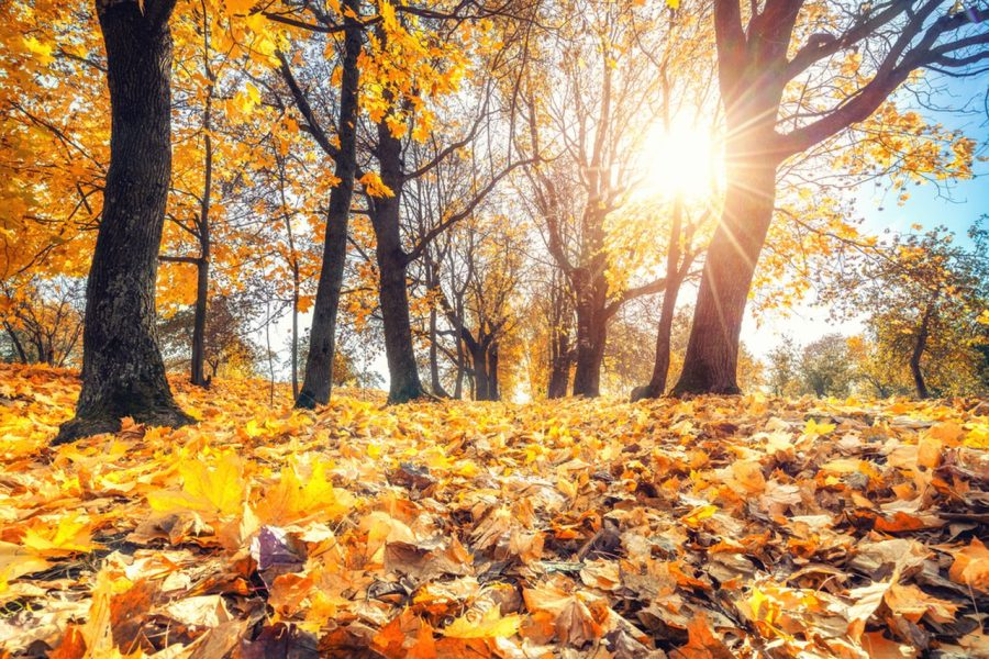 What Fall Activity Should You Do?
